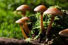 Foto Pilze