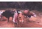 Foto Schäfer in Kenia