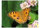 Foto Schmetterling