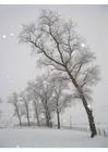 Foto Schnee - Winterlandschaft