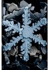 Foto Schneekristalle unter dem Mikroskop