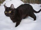 Foto schwarze Katze