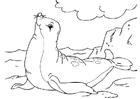 Malvorlage  Seehund
