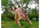 Foto Stegosaurus Kopie