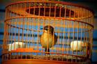 Foto Vogel im Käfig - Gefangenschaft