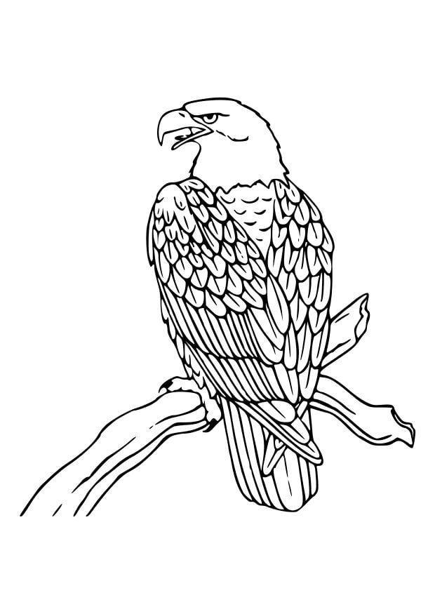 Malvorlage Adler | Ausmalbild 10535.