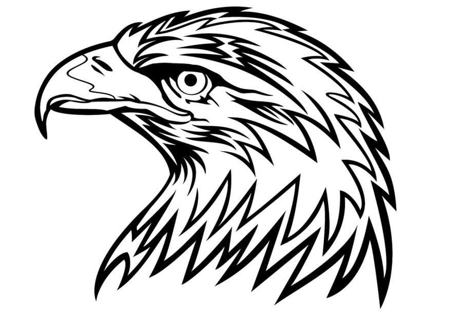 Malvorlage Adler | Ausmalbild 24672.