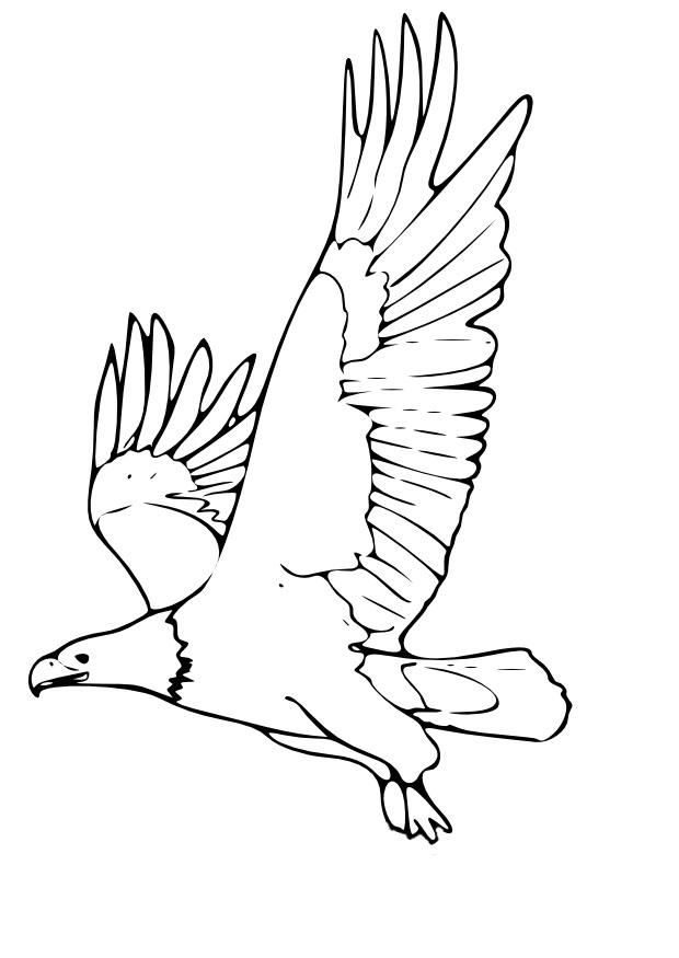 Malvorlage Adler | Ausmalbild 9965.