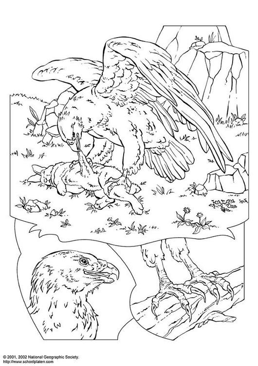Malvorlage Adler Ausmalbild 3056