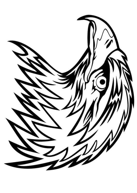Malvorlage Adler Ausmalbild 24672