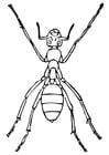 Malvorlage  Ameise
