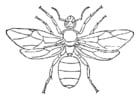 Malvorlage  Ameisenkönigin