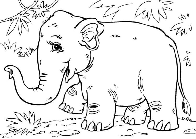 Malvorlage Asiatischer Elefant | Ausmalbild 27868.