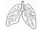 Malvorlage  Atmungssystem