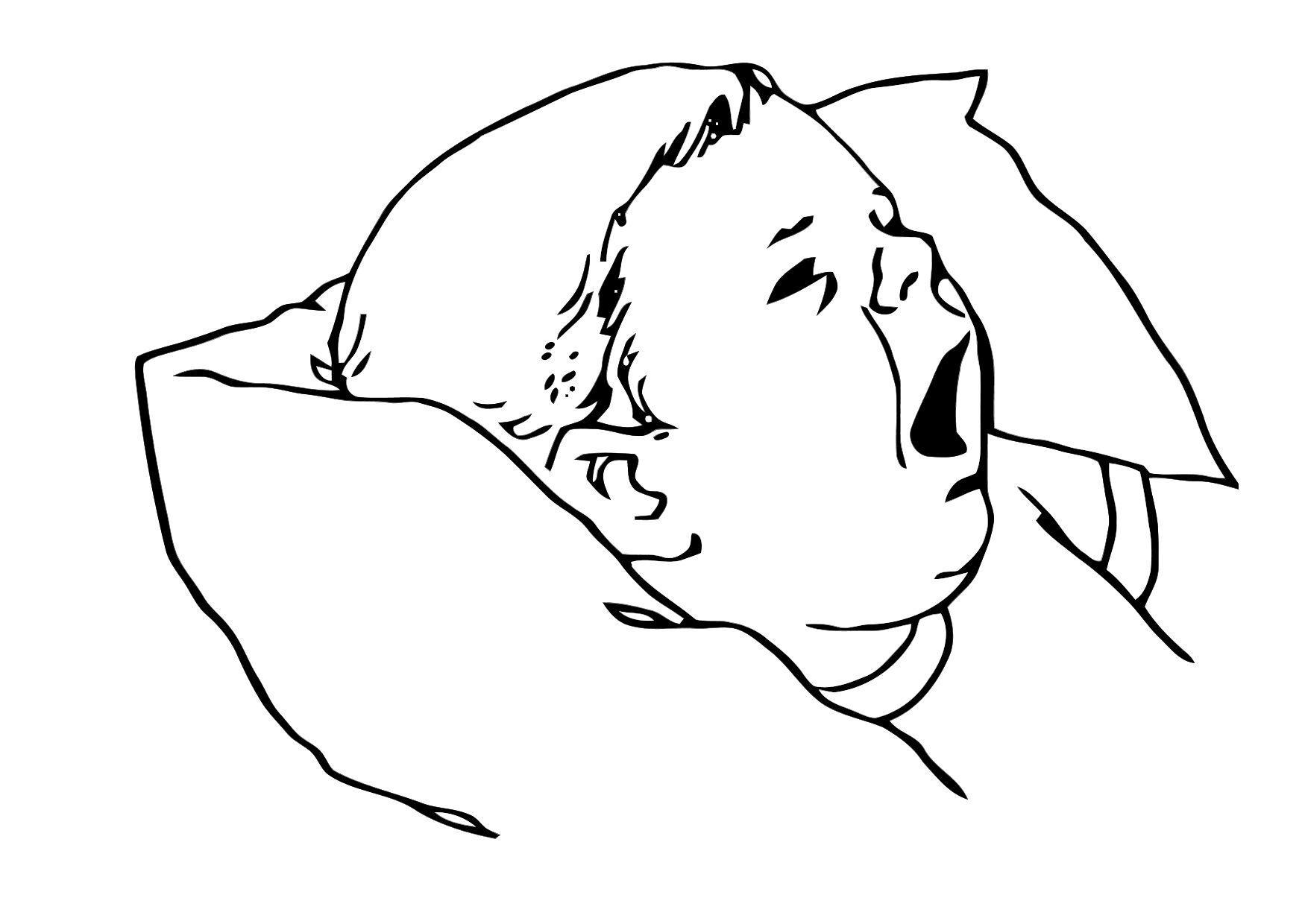 Malvorlage Baby | Ausmalbild 11864.