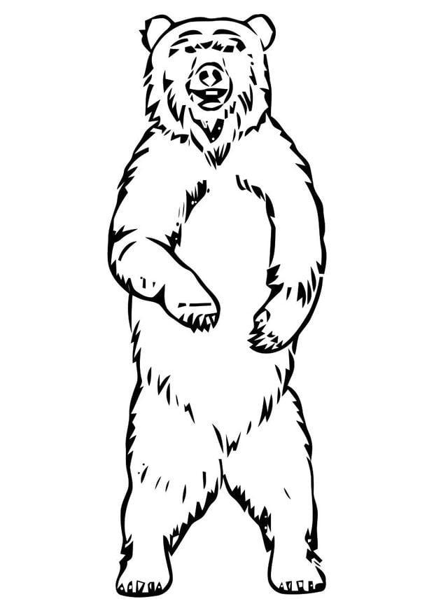 Malvorlage Bär | Ausmalbild 19400.