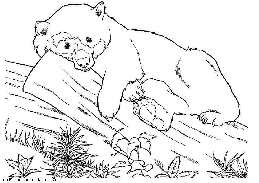 Ausmalbilder Malvorlagen Bären | My blog