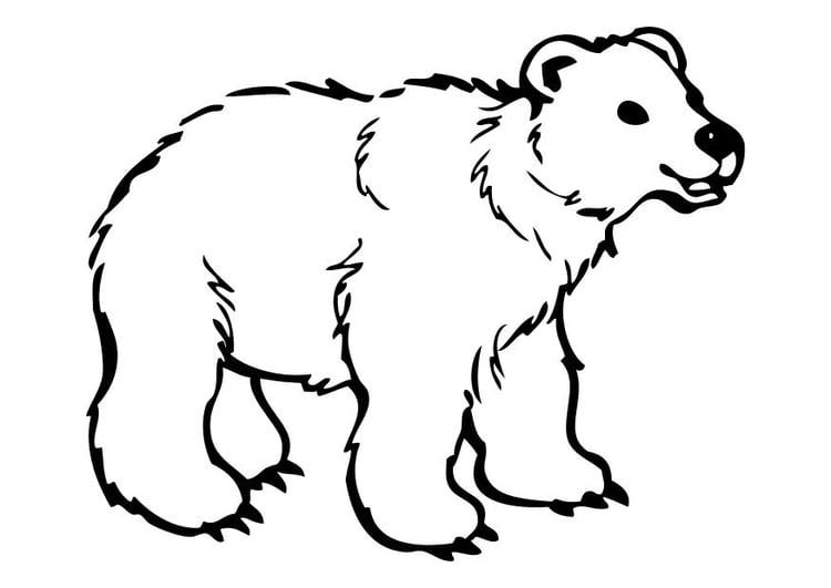 Malvorlage Bär | Ausmalbild 10262.