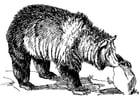 Malvorlage  Bär