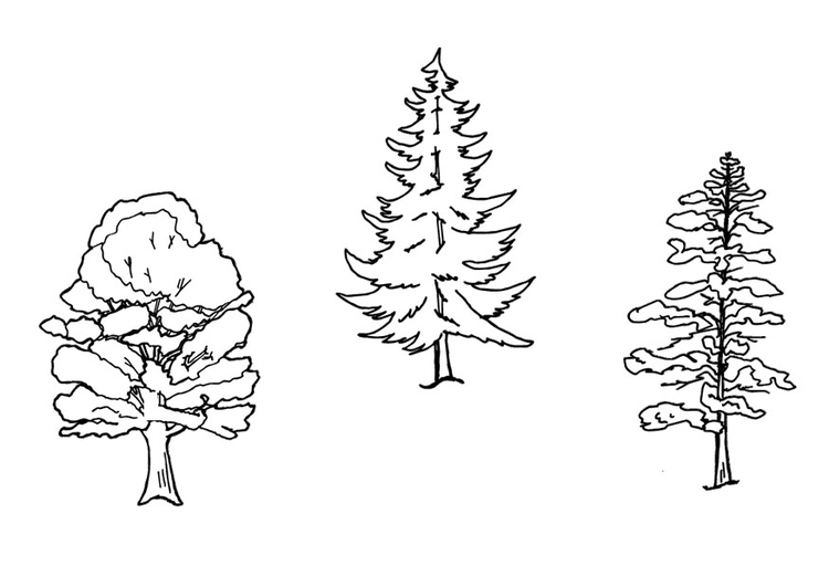 Malvorlage Bäume | Ausmalbild 9640.