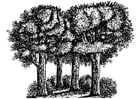 Malvorlage  Bäume