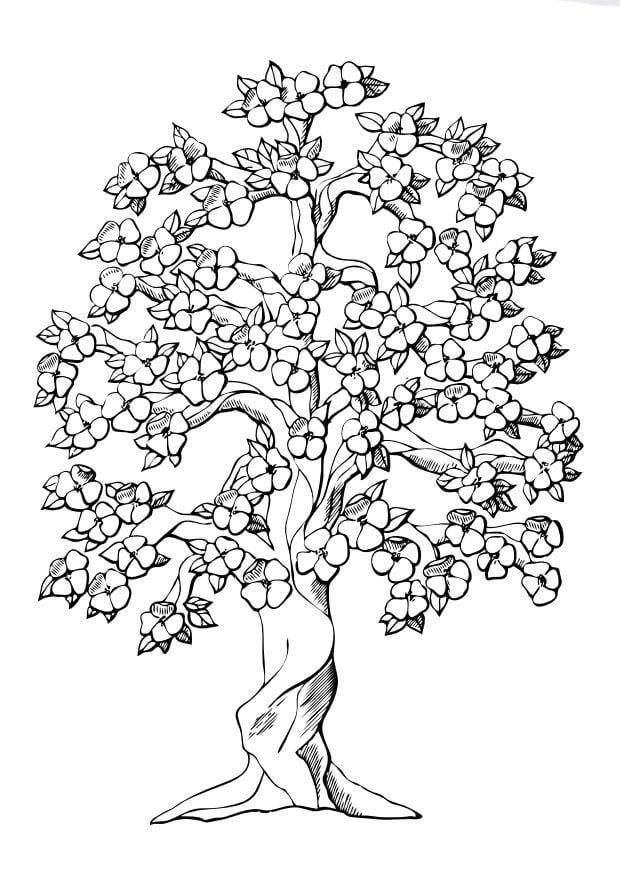 Malvorlage Baum mit Blüten | Ausmalbild 9996.