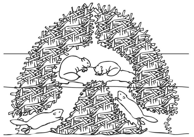malvorlage biberbau  ausmalbild 9448