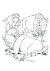 Malvorlage  Bisons