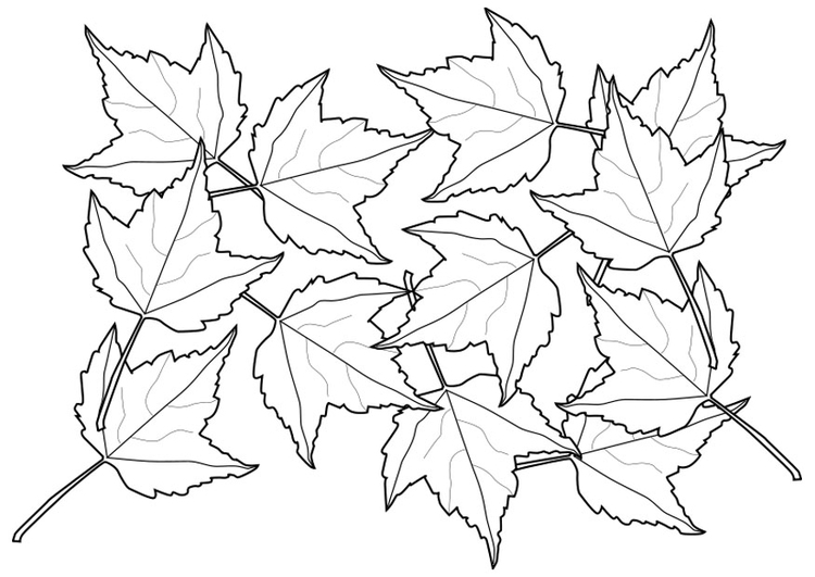 Malvorlage Blätter Ausmalbild 20553