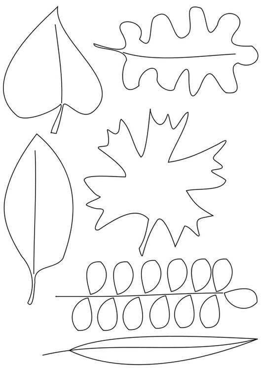 Malvorlage Blätter | Ausmalbild 20558.