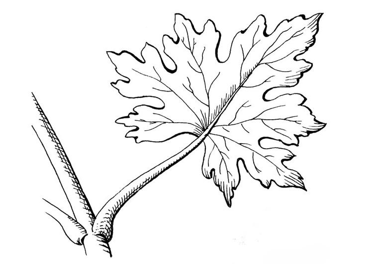 Malvorlage Blatt | Ausmalbild 18882.