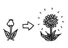 Malvorlage  blühen