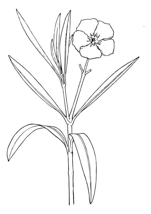 Charmant Bluebonnet Blume Malseite Ideen - Ideen färben - blsbooks.com
