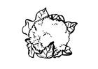 Malvorlage  Blumenkohl