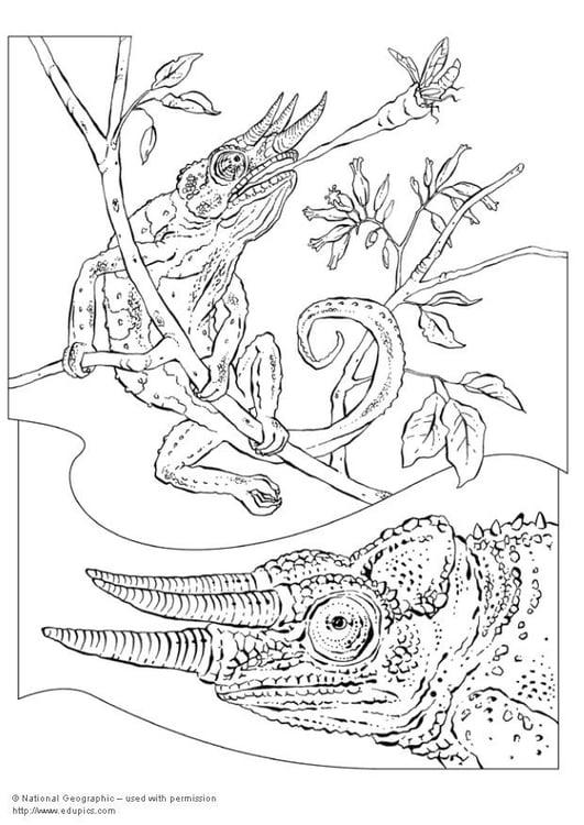 Volwassen Kleurplaten En Mandalas Malvorlage Cham 195 164 Leon Ausmalbild 5736 Images