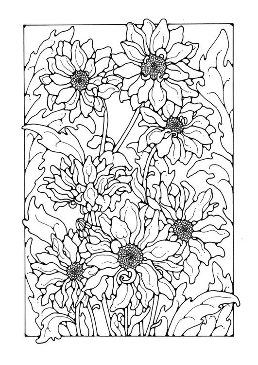 malvorlage chrysanthemen  kostenlose ausmalbilder zum