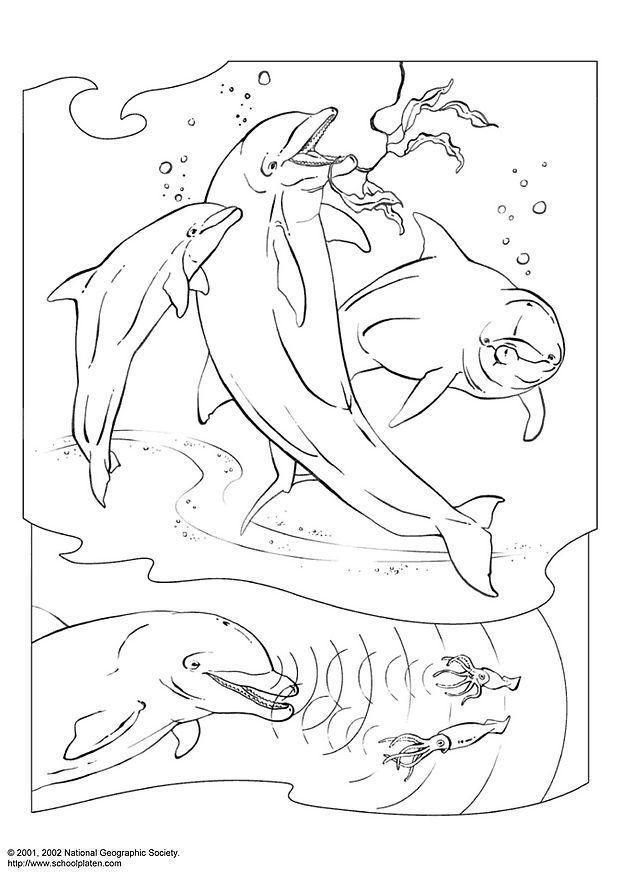 malvorlage delphin  kostenlose ausmalbilder zum