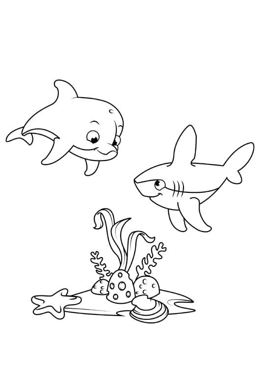 malvorlage delphin und hai  kostenlose ausmalbilder zum