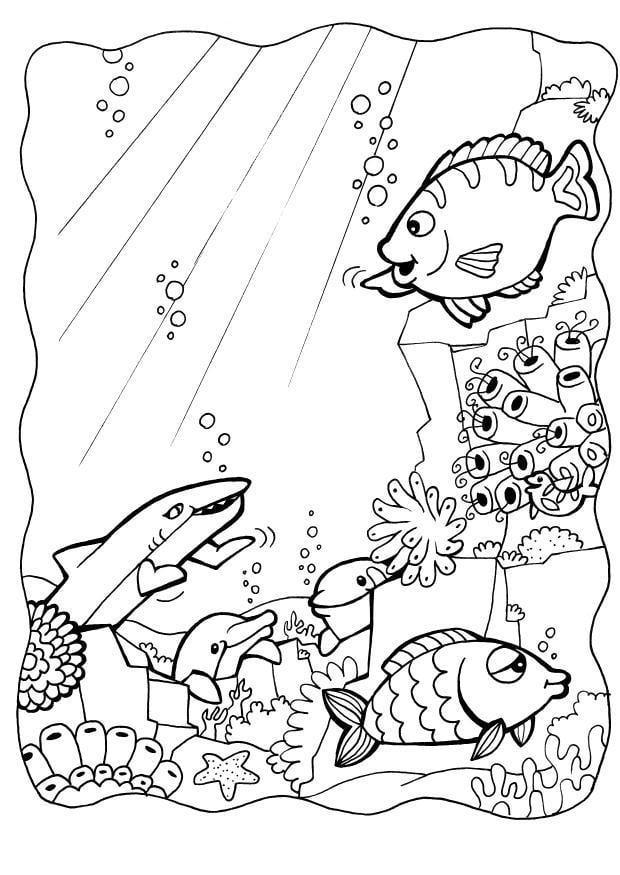 Malvorlage Delphinen mit Fische | Ausmalbild 7084.