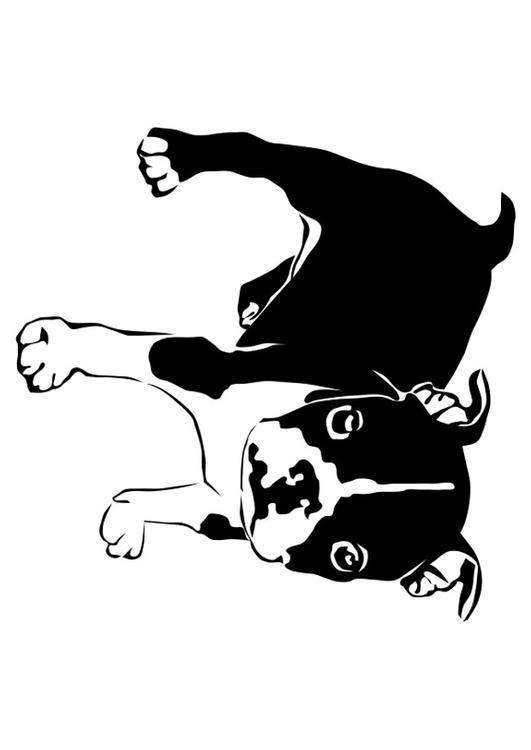 Malvorlage Dogge - französische Bulldogge | Ausmalbild 27821.