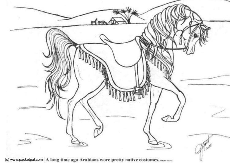 malvorlage dressur pferd  ausmalbild 6087