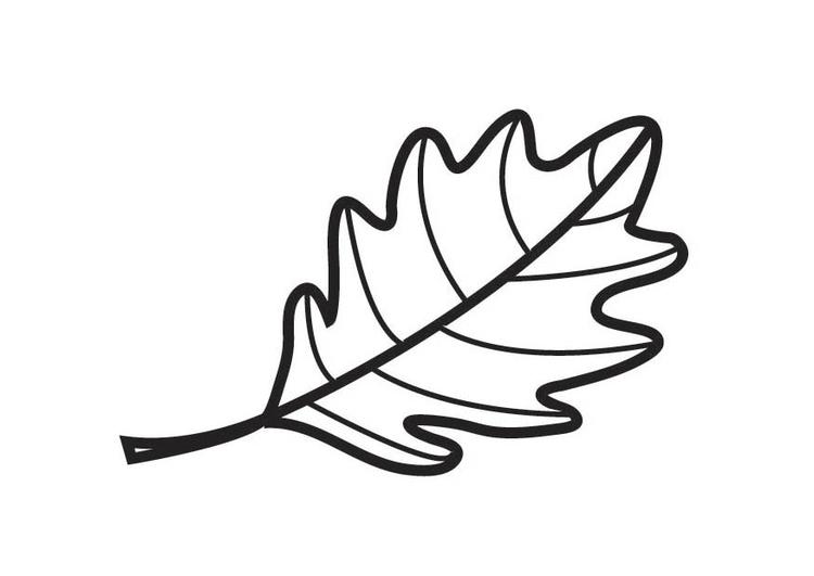 malvorlage eichenblatt  kostenlose ausmalbilder zum