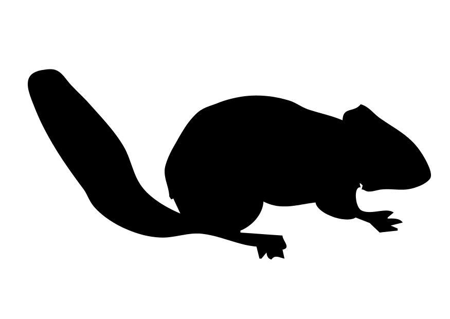 malvorlage eichhörnchen  kostenlose ausmalbilder zum