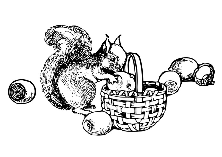 Malvorlage Eichhörnchen Ausmalbild 27136
