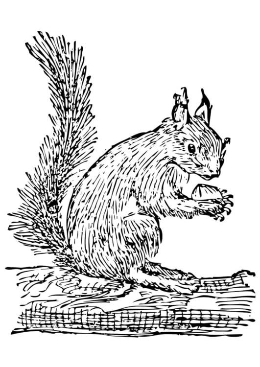 Malvorlage Eichhörnchen Ausmalbild 28464