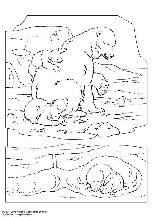 tundra coloring pages for kids - photo#28