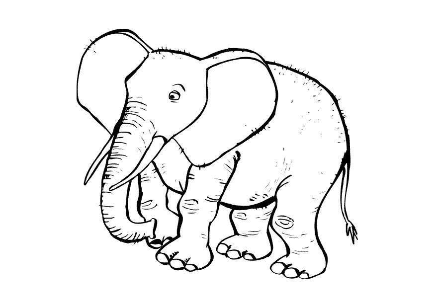 Malvorlage Elefant   Ausmalbild 10433.