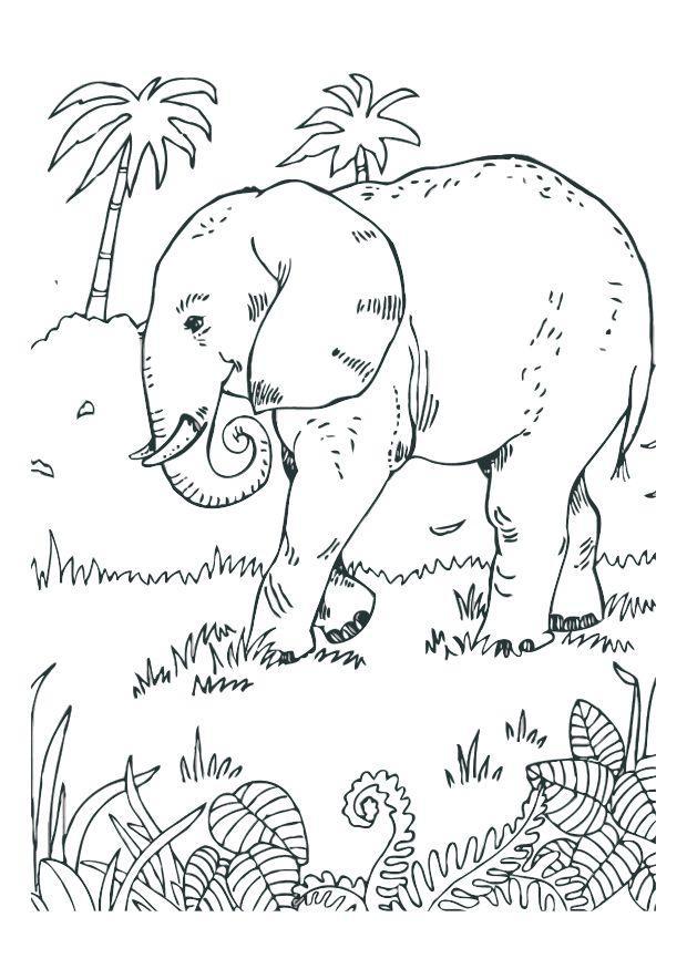 malvorlage elefant  kostenlose ausmalbilder zum