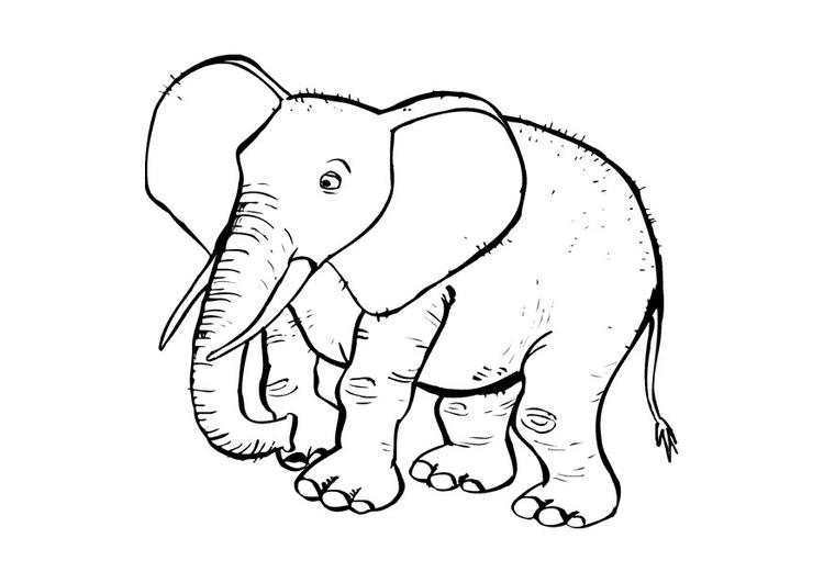 Malvorlage Elefant | Ausmalbild 10433.