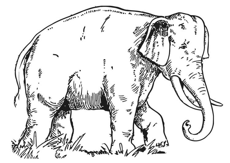 malvorlage elefant  ausmalbild 16596
